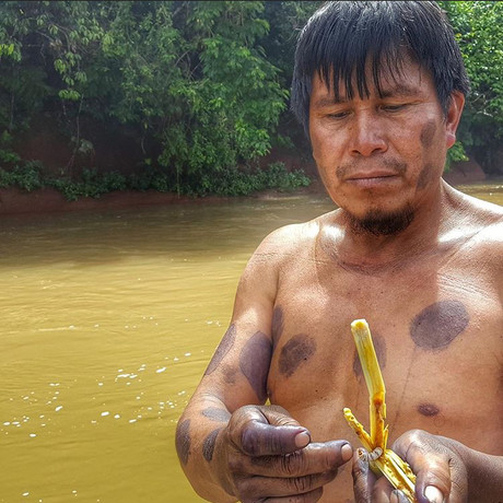 Demonstration of fishing with the traditionally used barbasco plant