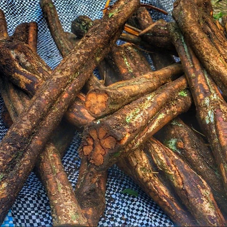 Ayahuasca vine, sustainably and locally sources