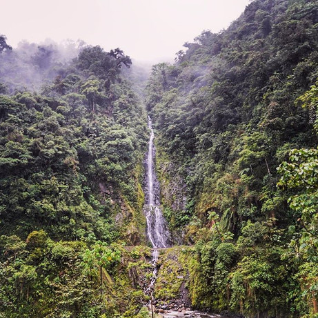Waterfall in the cloud forest between Cusco and Manu