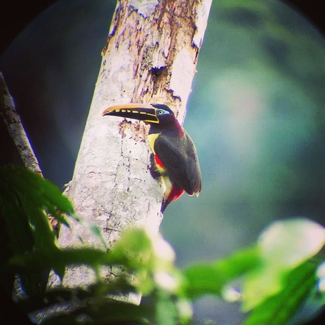 Amazonian Bird at Parign Hak