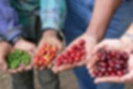 various-ripeness.jpg