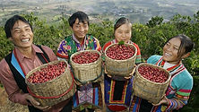 Chinese-coffee-farmers.jpg