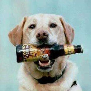 can-i-give-my-dog-beer.jpg