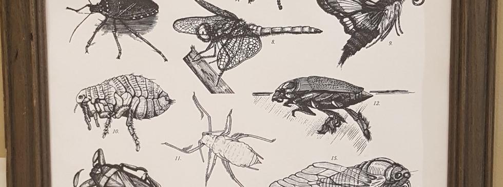 Andrea B - Canadian Bugs.jpg