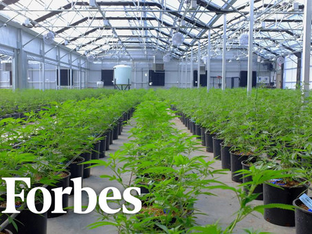 Forbes: Colorado's Cannabis Laws Need To Allow More Investment Dollars