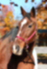 therapeutic horseback riding, therapeutic horse back riding, Adaptive Therapeutic Horseback Riding, Hippotherapy, Equine Assisted Learning, social skills group, summer horseback riding, summer horse back riding, horseback riding for special needs