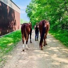 Rockin PJJR Ranch - Horse Lessons.jpg