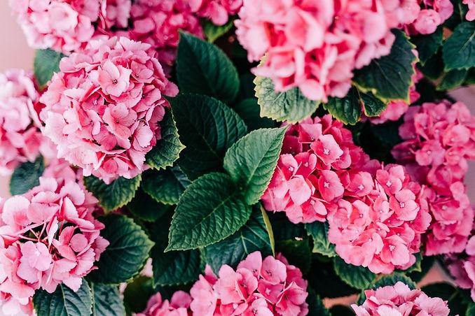Floral Subscriptions.jpeg