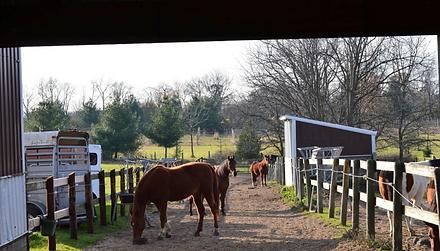Rockin PJJR Ranch - Pasture Boarding.png