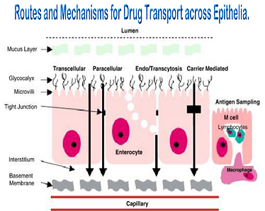 Routes Drugs transport