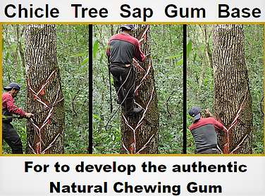 Healthy chewing gum base