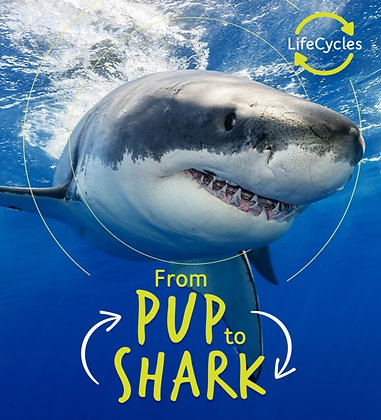 Lifecycles - Pup To Shark