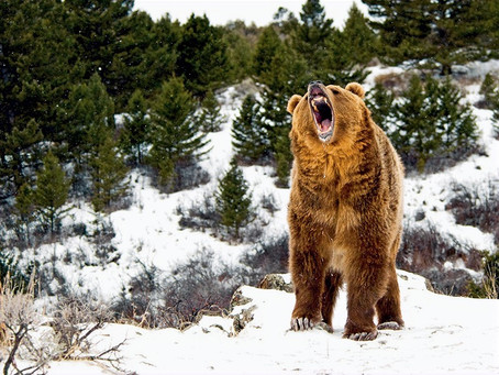Inverno: hora de atacar ou de hibernar?