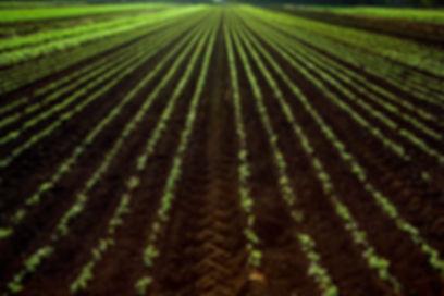 Silicon Fertilisers global presence agripower