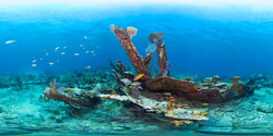 fl-keys-underwater-panorama