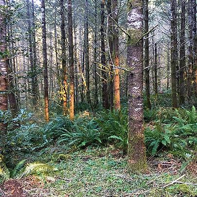 Timberland Management - Western Oregon