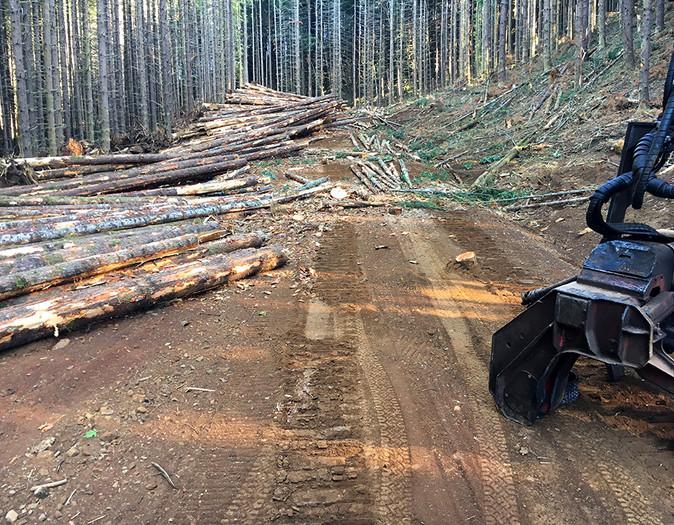 Right of Way Logging, Oregon