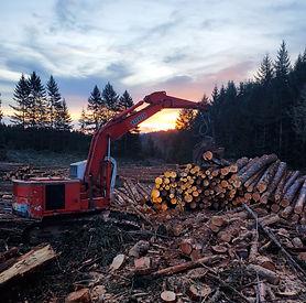 Final Harvest - Century Forest Managemen