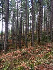 Oregon Timber Cruising - Century Forest