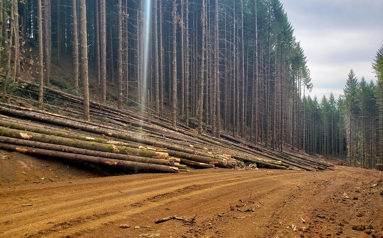 Brush Creek Road Right-of-Way Logging