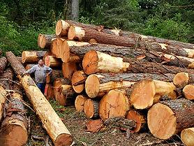 Log Marketing, Oregon - Century Forest M
