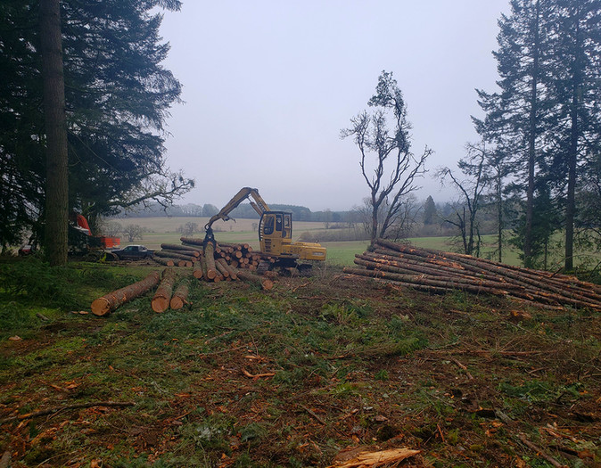 Oregon Forest Thinning
