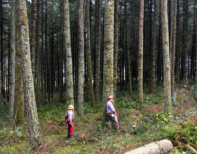 Partial Forest Thinning
