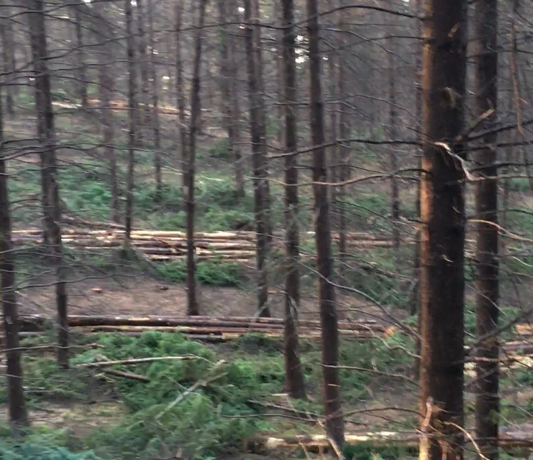 Original vs Thinned forest