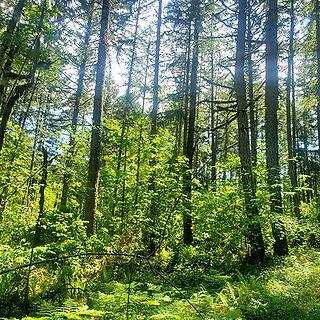Timber Cruising - Forest, Oregon.jpg