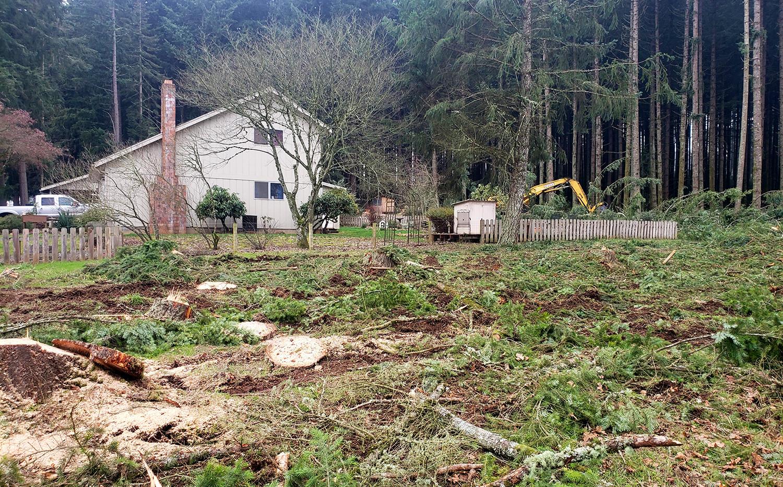 Landowner Tree Thinning Oregon