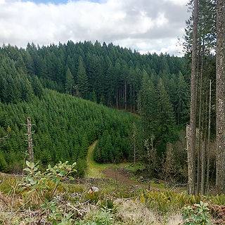 Land & Timber Acquisition - Oregon