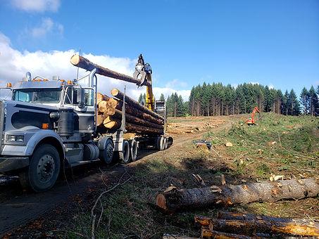 Timber Road Clearing, Oregon.jpg