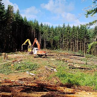 Logging - Oregon