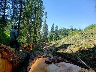 Log Marketing - Century Forest Managemen