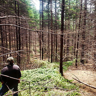 Commercial Thinning - Logging, Oregon