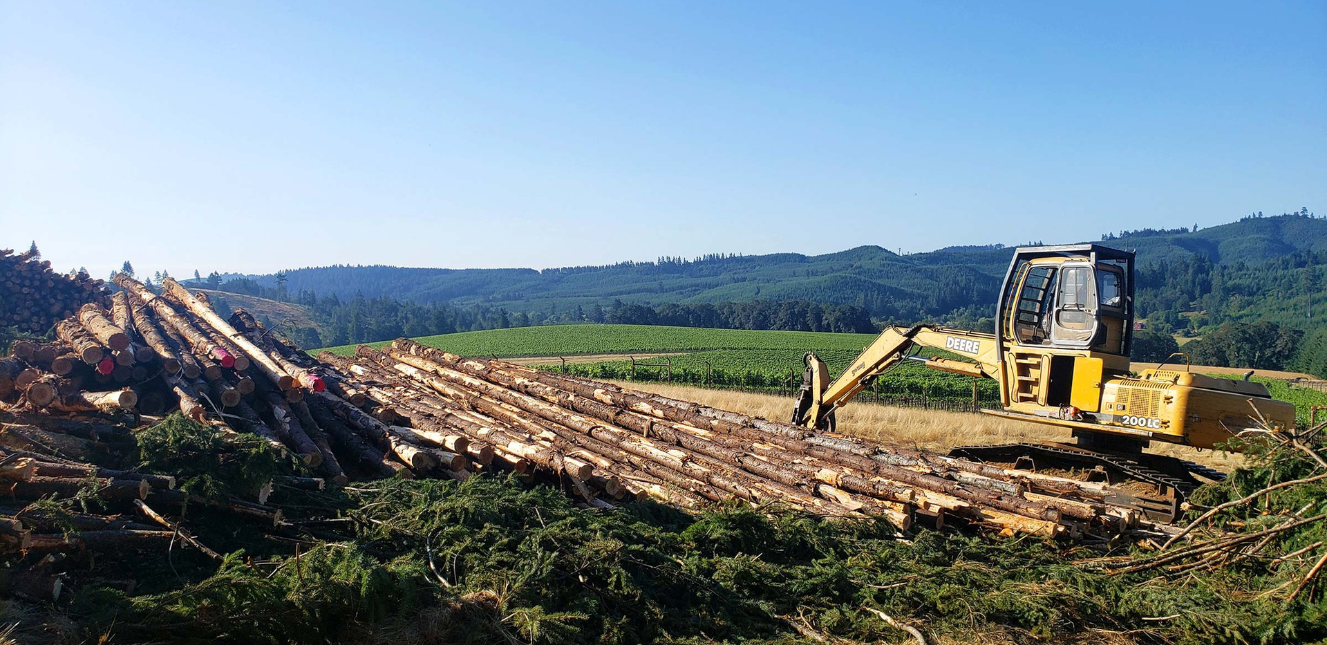 Century Forest Management - Forestry Ser