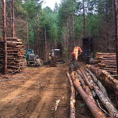 Lane County Logging.jpg