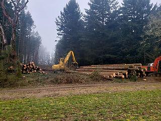 Harvesting Your Timber.jpg