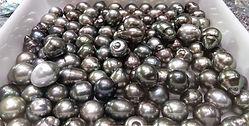 perles-noires-tahiti-e-tahiti-travel-pol