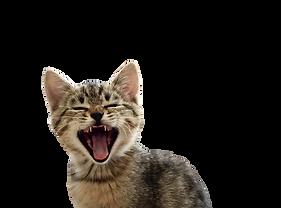 gato-removebg-preview(1).png