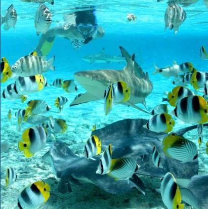 shark and ray snorkel tour.jpg