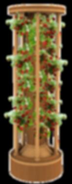 Тройсан темный бук со светлым с ягодами.