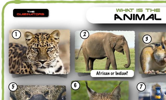 Name the Animal