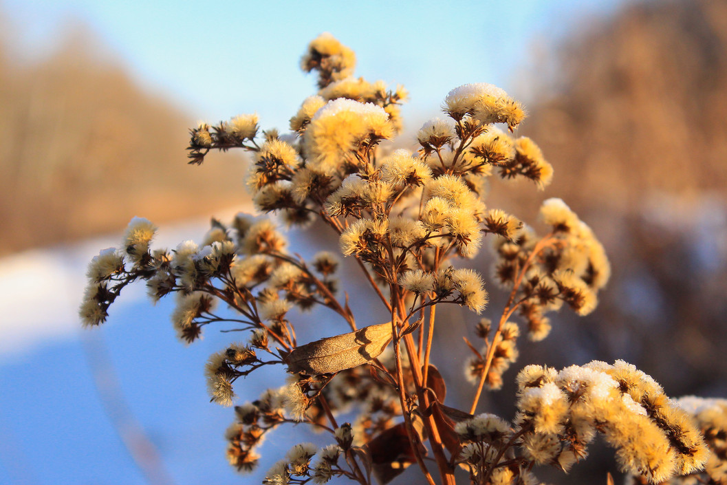 Fuzzy and Frozen