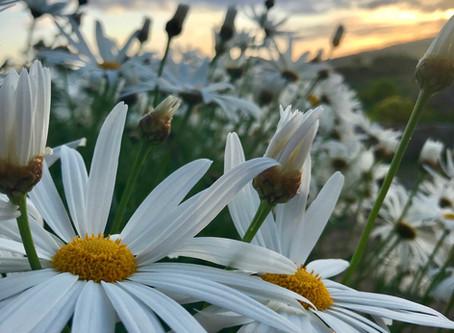 The Sacredness of Spring