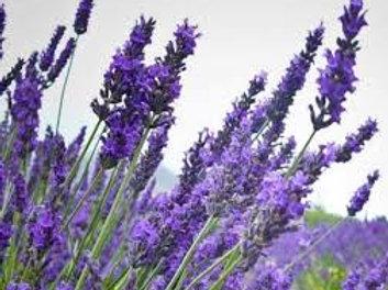 Kashmir Lavender 100mL