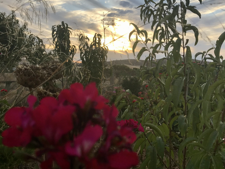 Dusty Fields & Ombre Sunsets