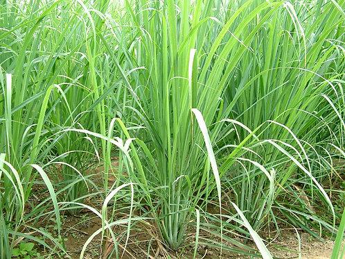 Lemongrass Essential Oil 100ml