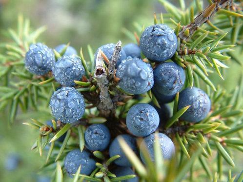 Juniper Berries 50g