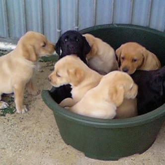 Pups+1.jpg